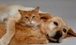 Šunys protingesni už kates?